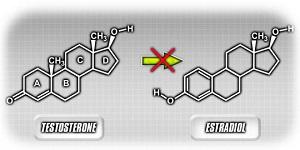 Преобразование тестостерона в эстроген