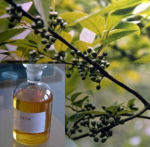 Эвкалиптовое масло: польза и вред