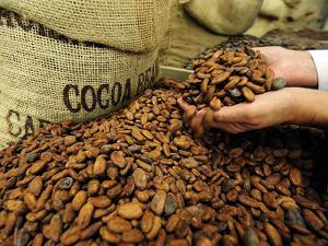 какао от повішенного артериального давления