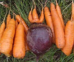 Печень любит свеклу и морковь