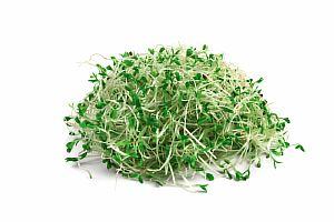 Ростки брокколи для очистки организма