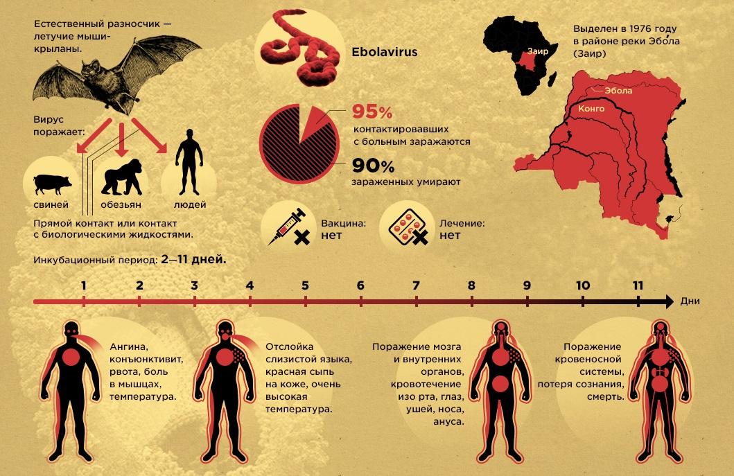 Симптомы лихорадки Эбола