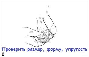 viglyadyat-muzhskie-yaytsa-foto