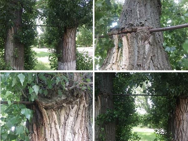 Пример самодельного турника между деревьми