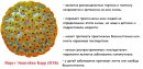 Вирус эпштейна-барр – симптоматика и лечение у детей