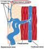 Что такое ретикулярный варикоз?