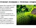 Мышиная лихорадка у взрослых: пути заражения, симптомы, стадии