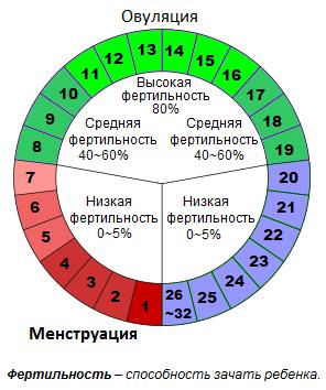 График менструального цикла