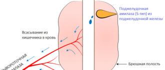 Процесс выработки и попадания в кровь амилазы