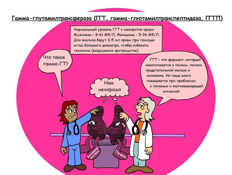 Гамма ГТ - диагностика фермента, норма и причины повышения