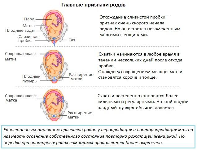 Главные признаки родов