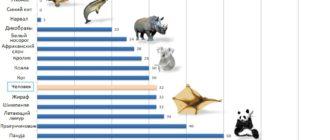 Сравнение количества зубов у человека и различных животных