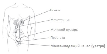 Органы, воспаление в которых приводит к резям во время мочеиспускания у мужчин
