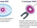 Обычное ЭКО и ИКСИ – в чем разница?