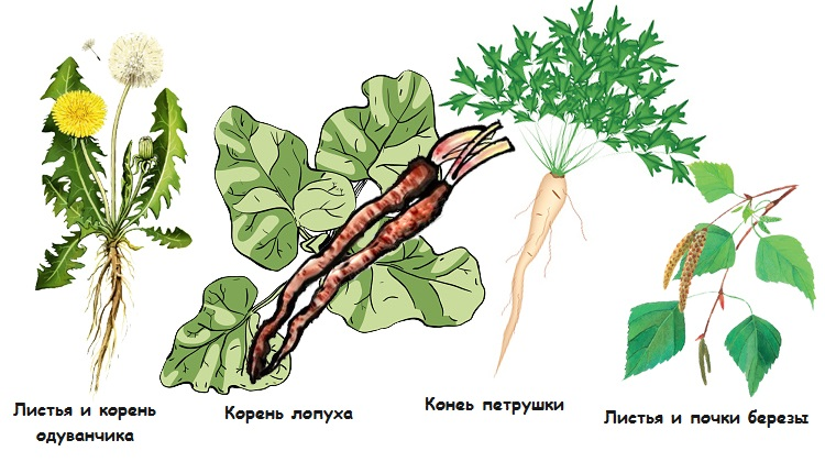 Травы при асците